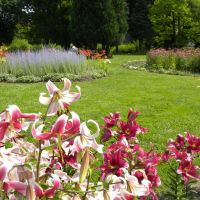 Ogród botaniczny PAN - Powsin - Mazowieckie