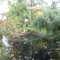Ogród Botaniczny - Berlin