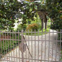 Ogród botaniczny w Padwie - Veneto