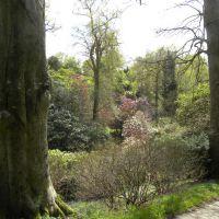 Wakehurst - Anglia