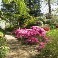 Wisley Gardens - Anglia