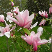Ogród Harriet Tupper - Leigh Delamere - Anglia