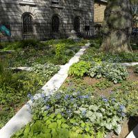 Chelsea Physic Garden - Anglia
