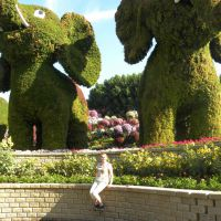 Miracle Garden - Dubaj - ZEA