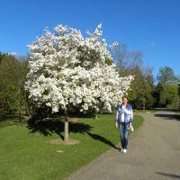 Hilier Gardens - Anglia