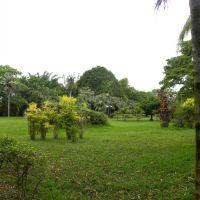 Sir Seewoosagur Ramgoolam Botanic Garden - Mauritius