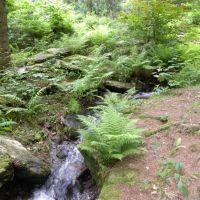 Park zdrojowy + arboretum - Lądek Zdrój - Dolny Śląsk