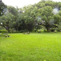 Ogród botaniczny - Curepipe - Mauritius