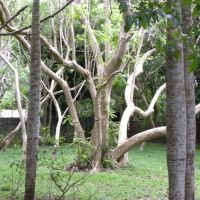 Balfour Garden - Beau Bassin-Rose Hill - Mauritius