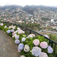 Zieleń Funchal - Madera