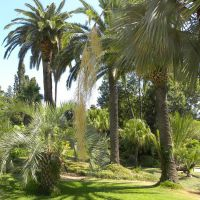 Ogród botaniczny Marimurtra - Blanes - Katalonia